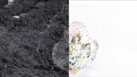 in them fighting a seed terrible. it sows (composite of video stills) - Sally Morfill
