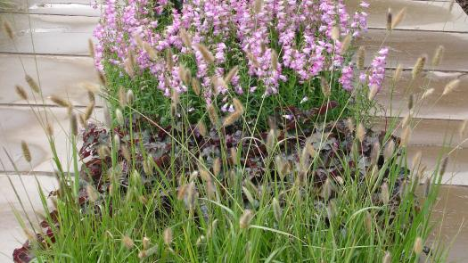 'Where Paths Cross' Antony Nolan Trust Garden, RHS Tatton.