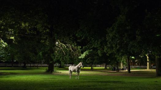 Six White Horses - Ian Rawlinson