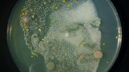 Microbe Me