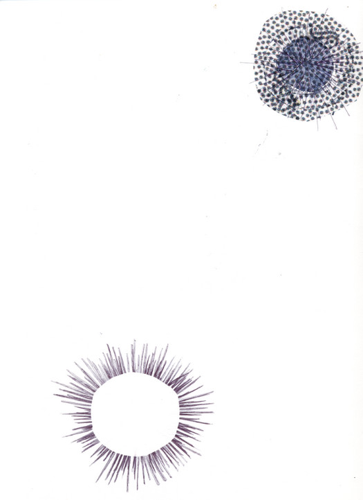 Sea Urchins Drawing by Rachel Kelly 2007