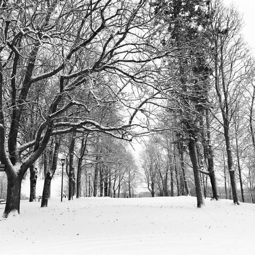 Snow in Viljandi