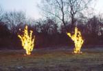 Two Burning Bushes