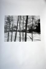 seventrees | darklight