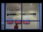 A Tiger's Skin (Solo show at CFCCA)