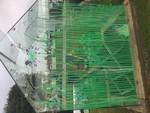 Greenhouse 2017